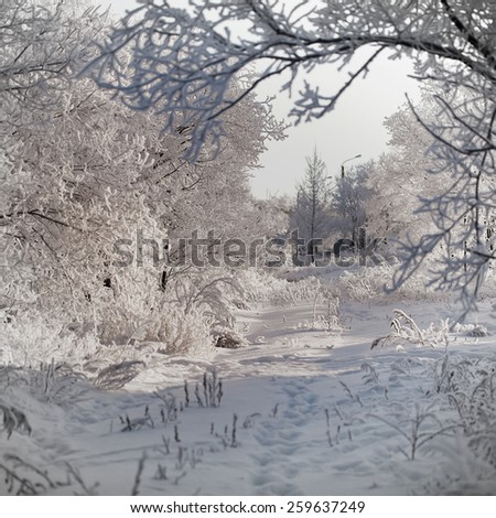 winter background with snow and tree