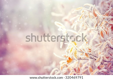 Winter Background with snow branches tree leaves and snowflakes on background Holiday Christmas greeting card