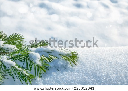 Winter background with snowy spruce - stock photo