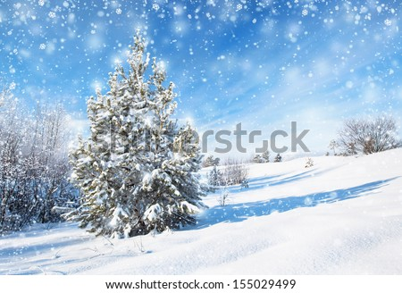 Winter background with spruce - stock photo