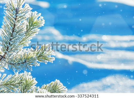 Winter background with the pine branch covered with hoarfrost - stock photo