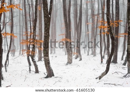 winter beach forest in a mist - stock photo