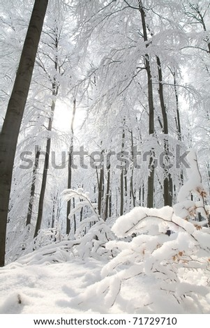 Winter beech forest on the slope on a frosty sunny morning. - stock photo