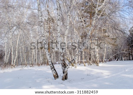Winter birch and pine forests, snow drifts, ski slopes and high mountains - stock photo