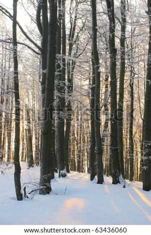 Winter birch forest detail - stock photo