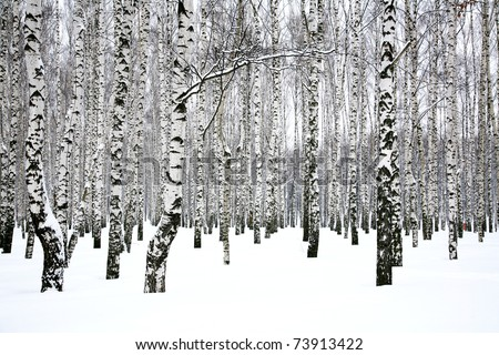 Birch tree winter stock photos illustrations and vector art