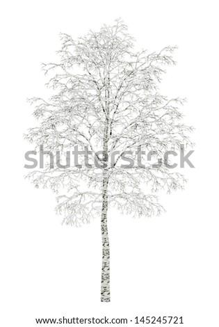 birch tree divorced singles dating site Dating in mountain view matches  dating in birch tree (mo) dating in  view dating site for single women in mountain view dating site for single men in.