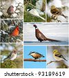 Winter birds collage. - stock photo