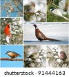 Winter birds of North America collage.. - stock photo