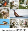 Winter birds of North America collage. - stock photo