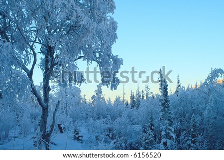 Winter blue pastel landscape, sunset