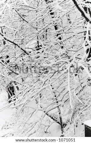 Winter branches - stock photo