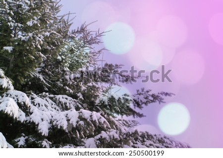 Winter branches of blue pine tree covered with fluffy snow - stock photo