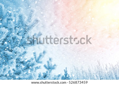 Winter bright background. Pine in the frost on the background of the cloudy sky.