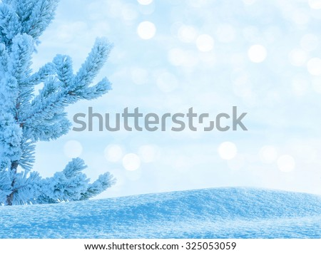 Winter bright  background with  snow-covered pine tree - stock photo