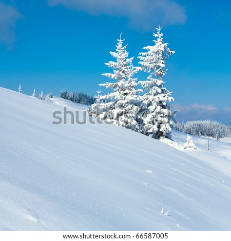 Winter calm mountain  landscape with snow covered firs and on ridge (Kukol Mount, Carpathian Mountains, Ukraine). - stock photo