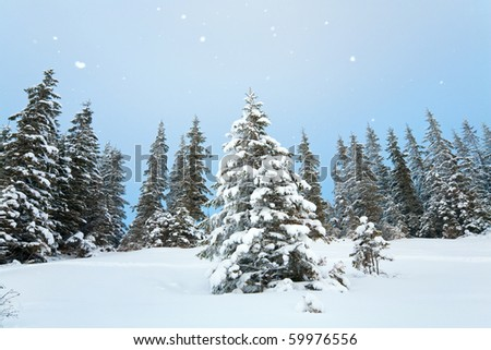 winter calm mountain landscape with snowfall and beautiful fir trees  on slope (Carpathian Mountains, Ukraine) - stock photo