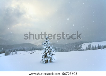 winter calm mountain landscape with snowfall ang beautiful fir trees  on slope (Kukol Mount, Carpathian Mountains, Ukraine) - stock photo
