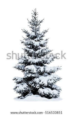 Winter Christmas tree covered with snow isolated on white background.