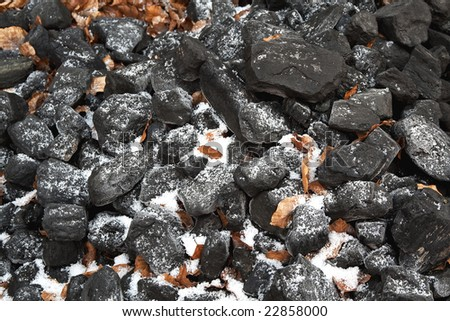Winter coal with frost and dead leaves