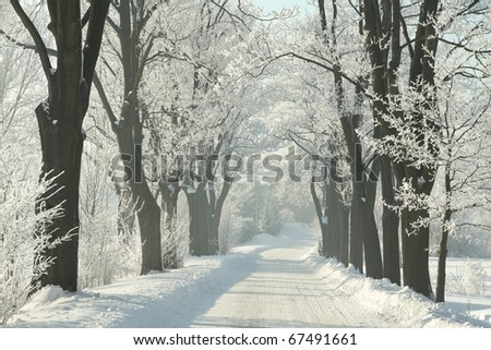 Winter country road among frosted maple trees in the morning. - stock photo