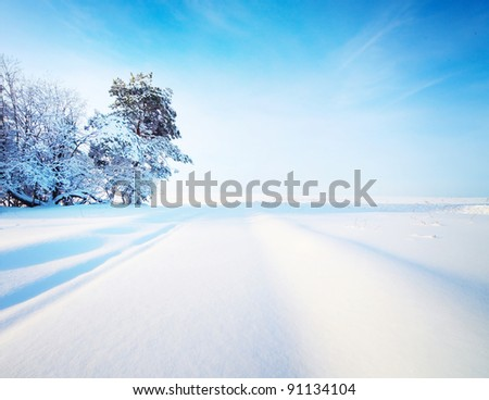 Winter countryside road and trees - stock photo