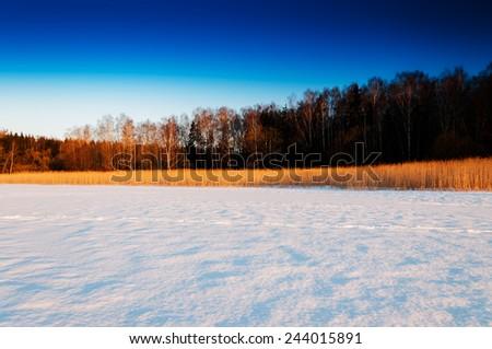 Winter crops horizon forest landscape composition - stock photo