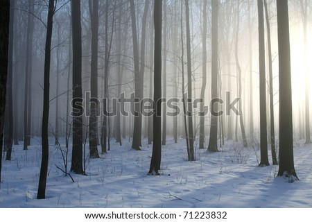 Winter deciduous forest on a foggy December's morning. - stock photo