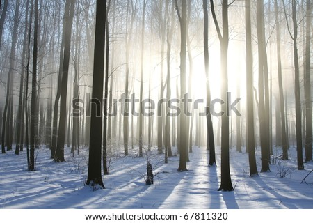 Winter deciduous forest on a foggy morning. Photo taken in December. - stock photo