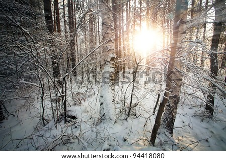 Winter deciduous forest with sunbeams over the trees - stock photo