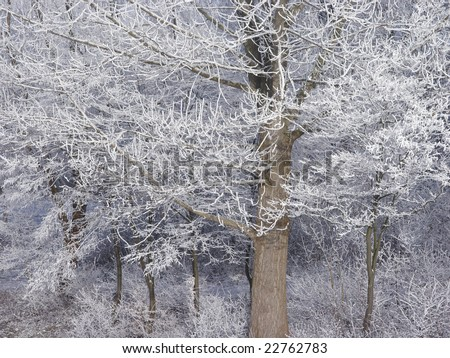 Winter deciduous trees covered with industrial snow - stock photo