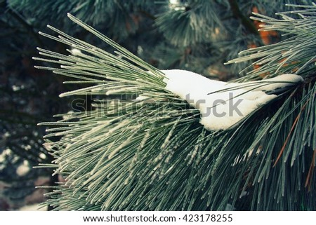 Winter detail of a pine twig partly covered with white frozen snow with green needles.  - stock photo
