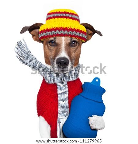winter dog scarf hat wool - stock photo