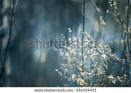 winter dry grass - stock photo