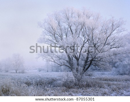 winter evening in the forest - fairytale Christmas landscape - stock photo