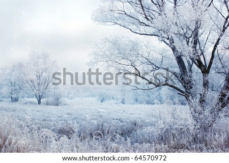 winter evening landscape with falling snow - stock photo