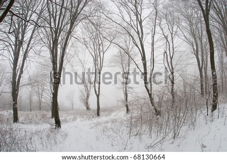 winter evening landscape with falling snow