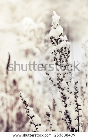 winter evening landscape with falling snow. Fog background, Wild flowers and dry grass covered with snow - stock photo