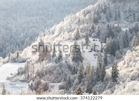 Winter fairy forest on mountain slope