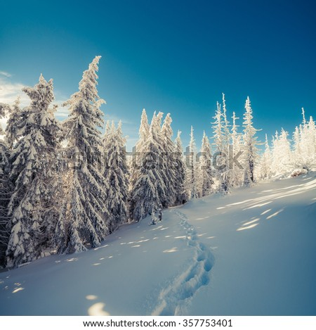 Winter fairytale scene in the mountain forest. Fir trees covered frost and fresh snow in the deep woodland. Instagram toning. - stock photo