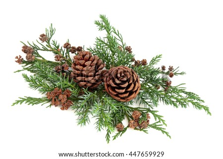 Winter fauna greenery with cedar cypress and fir with pine cones over white background. - stock photo