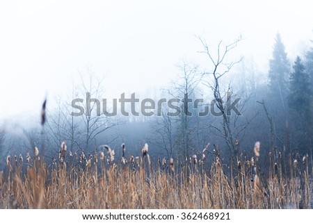 Winter fen-grass in a wetland area - stock photo