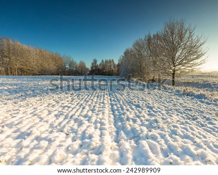 winter field and trees landscape