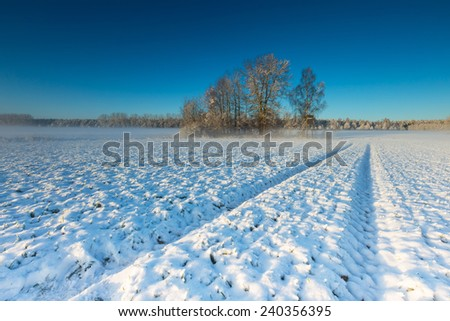 winter field at sunrise