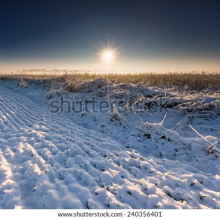 winter field at sunrise - stock photo