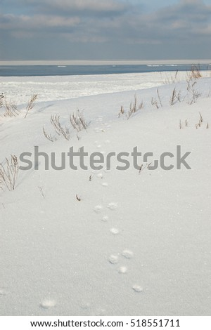 winter field with hare trail in the snow