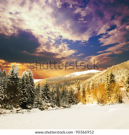 Winter fir-tree forest with snow covered trees and path - stock photo