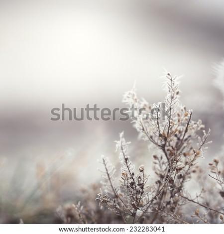 winter flowers - stock photo
