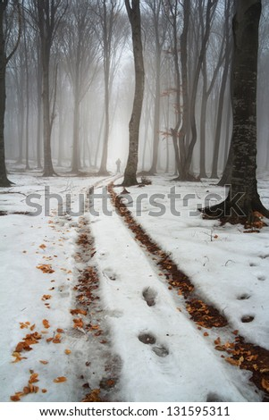 Winter foggy day into the forest
