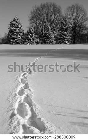 winter footprints black and white - stock photo